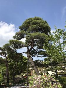 20190521_niwaki02